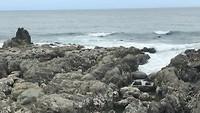 Zeehondjes onderweg