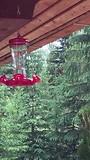 Kolibries op de porch