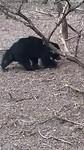 Op het laatste nippertje nog een Slothbeer