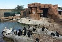 Pinguïn project