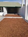 Koffieplantage Katwijk