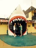 Sharkshow Hervey Bay