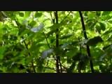 fantail stalk bird