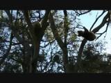 Koalas!!