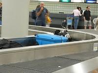 En ja hoor, onze koffers zijn er ook. Nu lekker naar huis