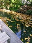 Overal al herfstbladeren tijdens ons vaartochtje