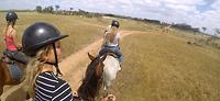 paarden12