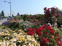 Prachtig bloemenperkje (zie ook de video)