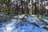 Sneeuw en zon