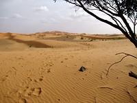 De Erg Chebbi woestijn begint bij de achterdeur van de herberg