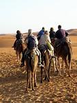 """De """"kameelgangers"""" komen terug"""