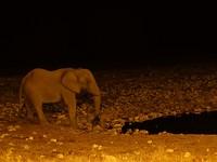 De olifant bij de waterhole, +/- 22:00uur