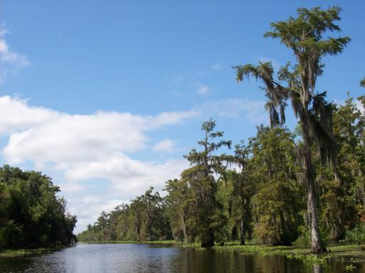 Avery Island Swamp Tour