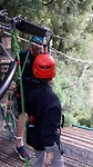 Zipline: Canopye in the forrest