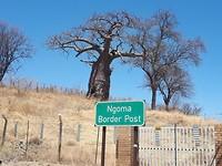 Baobab aan de grens met Botswana.