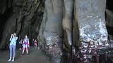 5 Van Dunedin naar Curio Bay 240218