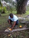 Kokosnoten tijdens een bezoek aan een boer