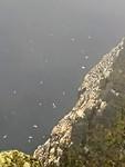 500.000 broedende zeevogels