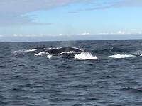 Walvissen gespot😁. Humback whales