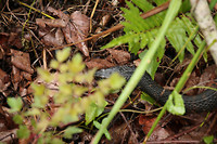Creapy snake...