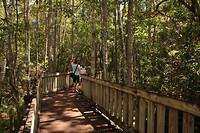 Het houten pad...