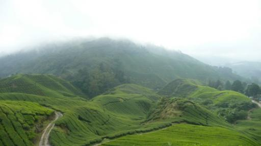 Cameron highland, zo mooi alle theeplantages.