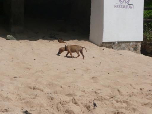 Ella op het strand!