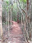 Wandelen door de jungle