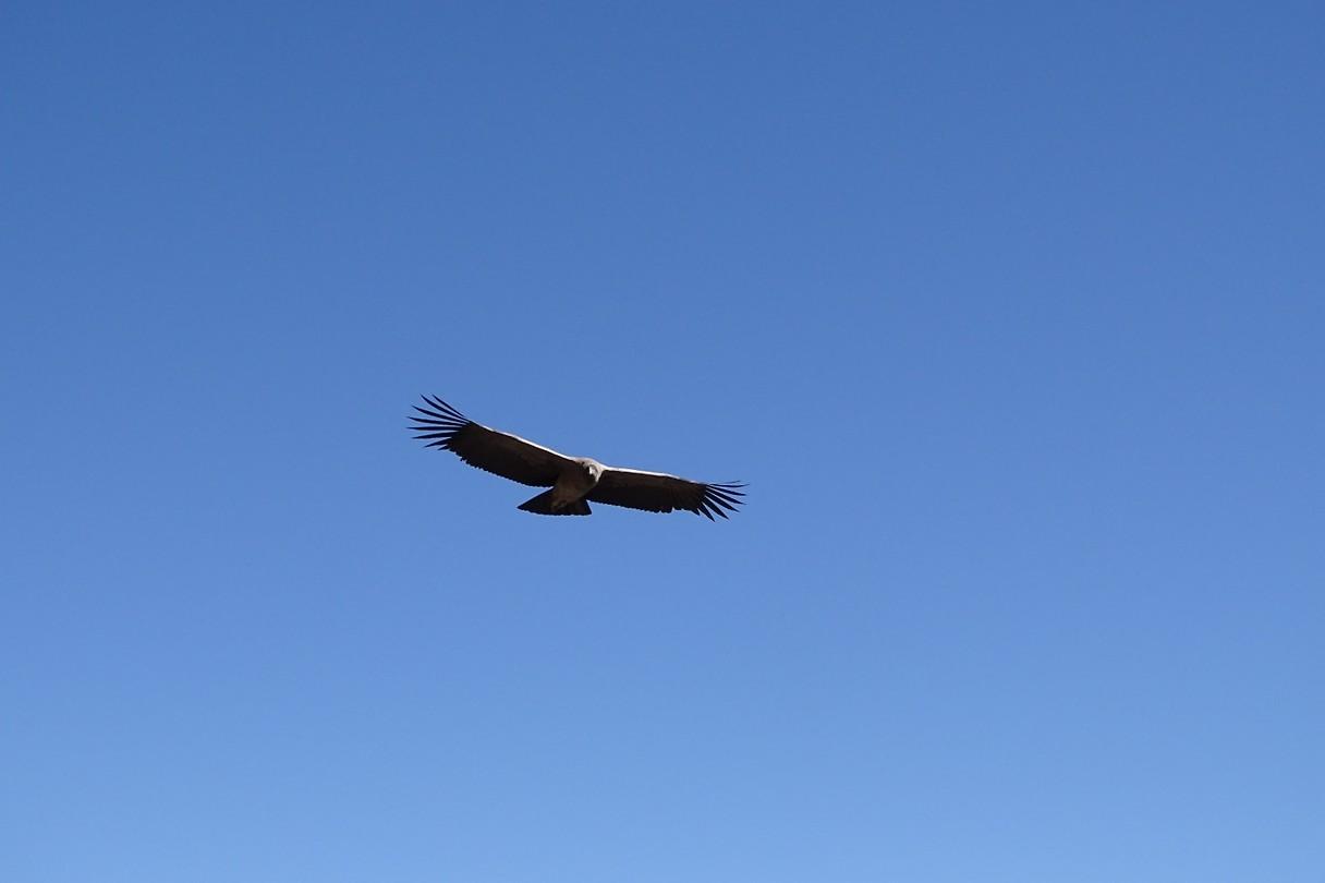 376 en nog een condor
