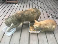 De kattenfamilie