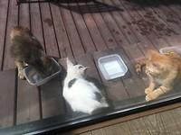 De nieuwe kat