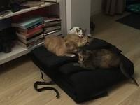 Familie kat onder dak.