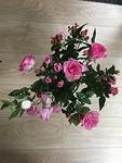 Flower Plus