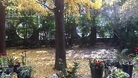 Het sneeuwt gele bladeren!!!!