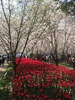 Het rode tulpen bed!!!