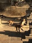 De Monkey tempel