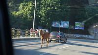 Paard in de weg