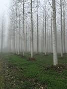 Mist La Reole