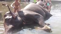 Olifant wassen in Thangkanan