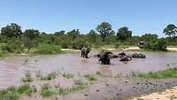 Olifanten bij waterpoel