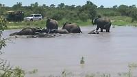 Jeepsafari Swaziland
