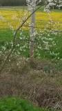 naast lengte en saaiheid ook  bloei