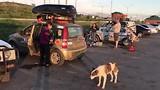 Honden voeren aan de grens