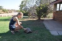 Schildpad in de karoo garden