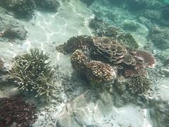 Mooi koraal