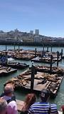 Zeehondjes en zeeleeuwen