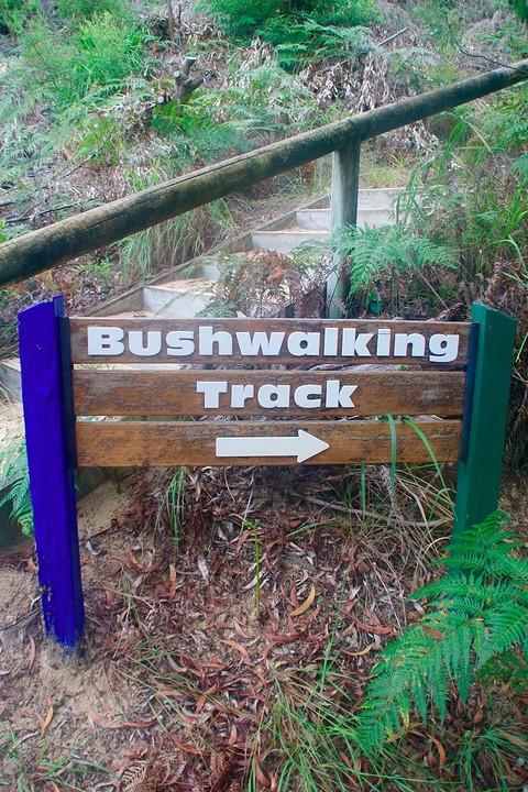 Bushwalking!
