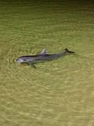 Baby dolfijn!