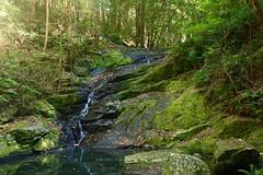 Kondalilla Falls NP