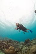 Diving!